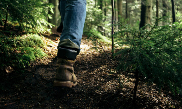 Spend 15 meaningful minutes in a forest